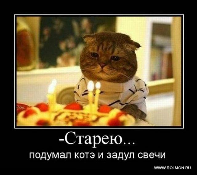 День кошек россии